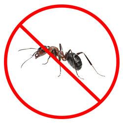Ant Removal Nottingham