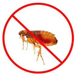 Flea Pest Control Nottingham