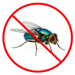 Fly Removal Nottingham