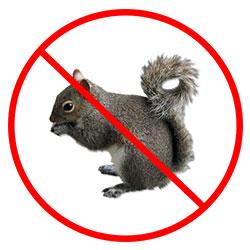 Squirrel Pest Control Nottingham