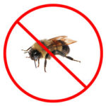 Bee Removal Nottingham, Derby and Leicestershire