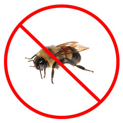 Bee Removal Nottingham