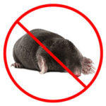 Mole Removal Nottingham, Derby and Lecistershire