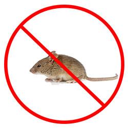 Mouse Exterminator Nottingham