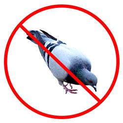 Bird Nest Removal Nottingham - Pigeon Removal