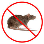 Rat Control Nottingham, Derby and Leicester