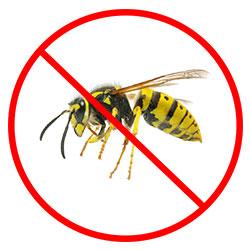 Wasp Nest Removal Nottingham