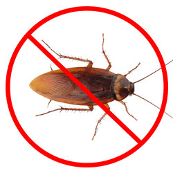 Cockroach Pest Control Nottingham