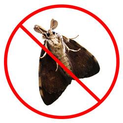 Carpet Moth Removal Nottingham